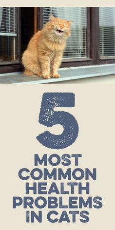 5 Most Common Health Problems In Cats