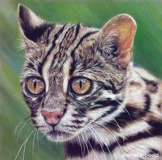 portretinbeeld-leopardcat.jpg (1280×1266)