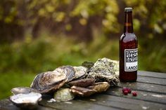 oyster hunting in limfjord, denmark.