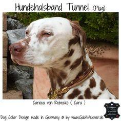 Hundehalsband + echte Tunnel