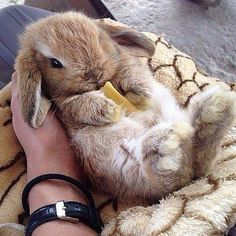 Little bunny rabbit Cute Baby Bunnies, Funny Bunnies, Cute Funny Animals, Cute Baby Animals, Animals And Pets, Cute Babies, Tiny Bunny, Wild Animals, Fluffy Bunny