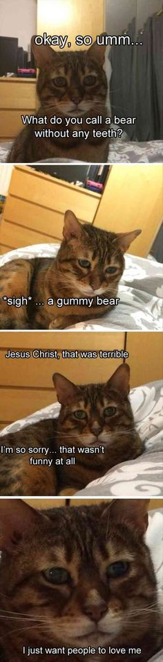 Cat, Kitten, Joke, Humour, Image Meme: OkaV. So umm What do you call a bear without any teet sigh* a gummy bea Jesus Christ, that was terrible I'm so sorry... that wasn't funny at all I just want people to love me