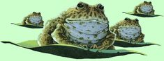 One of my very favorite illustrations - the flying frogs from David Wiesner's Tuesday! #kidlit