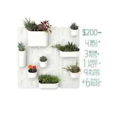 Large Wall Mount Kit. Includes 4 small pots, 3 medium pots, 1 Large Pot, 9 wall mount plates, and 6 single wall mount pucks.