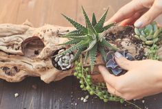 Charming Hanging Plants ideas to Brighten Your Patio – Gardening Decor Terrarium Cactus, Succulent Planter Diy, Succulent Arrangements, Diy Planters, Cacti And Succulents, Planting Succulents, Terrariums, Log Planter, Suculentas Diy