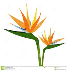 Image result for bird of paradise logo