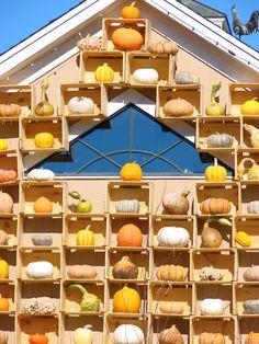 Wilson's Farm, Lexington MA in October