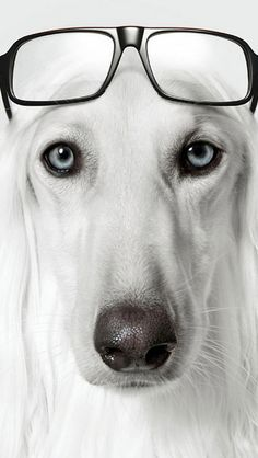 dog with glasses - HD1125×2436