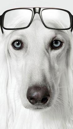 Crazy Vision - dog wearing glasses