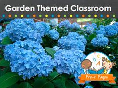 Ideas and pictures for creating a garden themed classroom in preschool, pre-k, or kindergarten.