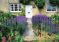 In a sunny front garden that has good drainage massed lavender always makes a stunning sight
