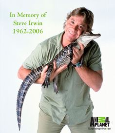 Steve Irwin, The Crocodile Hunter, watched him all of the time. Terri Irwin, Steve Irwin, Irwin Family, Crocodile Hunter, Bindi Irwin, Gone Too Soon, Pokemon, I Miss Him, In Loving Memory