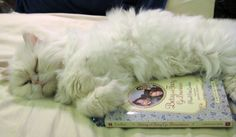 A kitty falling asleep while reading my favorite Betsy-Tacy book