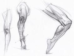 Michael Hampton - Anatomy Drawings