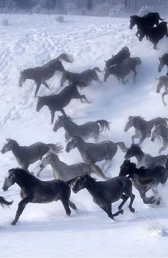 The horses are beautiful wow!