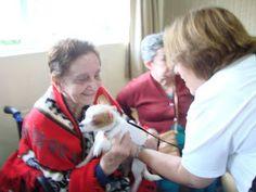 Cãozinho com idosa na TAA