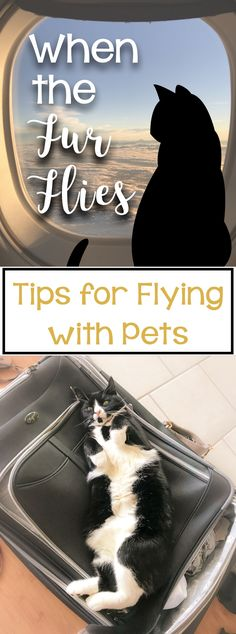 When the fur flies: Tips for flying with pets - travel with my cat - . - When the fur flies: Tips for flying with pets – travel with my cat – fly - Dog Travel, Travel Tips, Travel Hacks, Travel Advice, Travel Ideas, Travel Inspiration, Travel Destinations, Flying With Pets, Moving To Hawaii