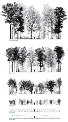 Patrick Ruijzenaars / In imagining and designing forest is frequently talked about the final stage. Equally interesting is the way to get there. It takes many human lives, indeed a lifetime, for them...