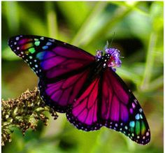 Nature exhibits the most stunning colors in the most delicate ways.