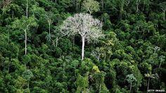 Brazil dismantles 'biggest destroyer' of Amazon rainforest - BBC News