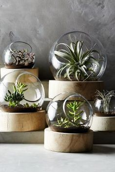 If you want to add some green to your decor, try these fun Anthropologie planetarium terrariums. Get some now on ShopStyle!