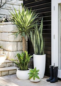 Garden Design Different pots with different plants, various heights of green - Style-savvy renovator Tara Dennis reveals how to turn plain pots into pretty planters - by Jane Parbury