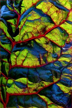 Azuis verdes, traços rosas, flora // Lifeblood ~ swiss chard macro by Leenda K Patterns In Nature, Textures Patterns, Fotografia Macro, Abstract Photography, Levitation Photography, Experimental Photography, Exposure Photography, Water Photography, Kandinsky