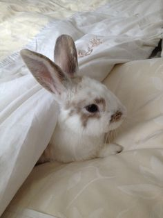 Bunny, animal, and rabbit image Cute Creatures, Beautiful Creatures, Animals Beautiful, Amor Animal, Mundo Animal, Animals And Pets, Baby Animals, Cute Animals, Baby Bunnies