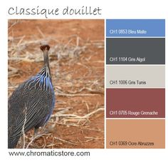 Le bleu s'associe parfaitement aux tons de terre cuite ou de tomettes pour une atmosphère classique, chaleureuse et accueillante. www.chromaticstore.com #couleur #peinture #orange