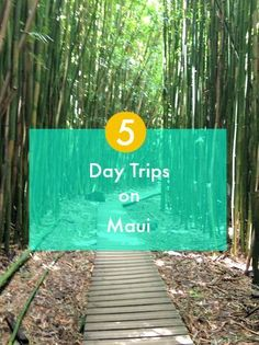 Looking for the best things to do on your Maui vacation? Click through to read my recommendations for 5 great day trips!