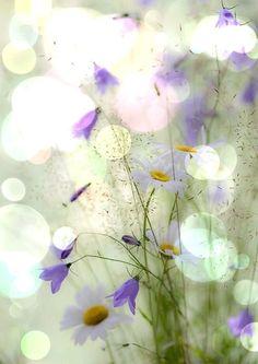 Bokeh flowers and water Spring Flowers, Wild Flowers, Bokeh Photography, Levitation Photography, Exposure Photography, Winter Photography, Abstract Photography, Belle Photo, Exotic Flowers
