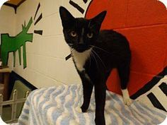 **ULTRA URGENT** ***ONLY HAS UNTIL 6 PM, TUESDAY, DECEMBER 3, 2013!!!*** BEAUTIFUL BLACK/WHITE TUXEDO FEMALE ADULT (ID# 2273) AT FLOYD COUNTY ANIMAL CONTROL, 431 MATHIS ROAD, ROME, GA (706) 236-4545 & (706) 236-4537. jbroome@floydcountyga.org PLEASE SAVE ME!!!
