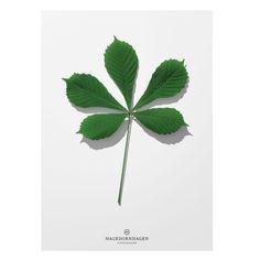 poster blad | Hagedornhagen | designlemonade.com