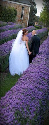Wedding Venue- Weddings at Sault: Among the lavender
