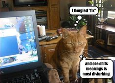 cats on computers pictures | cat-computer