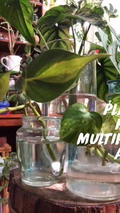 Sun Plants, Green Plants, Potted Plants, House Plants, Shadow Plants, Winter Plants, Naturally Beautiful, Hanging Plants, Exterior