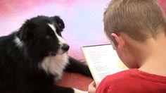 Schoolkinderen lezen voor aan honden.