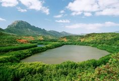 This lookout gives you a fabulous view of the Alekoko Pond, which is thought to have been built approximately 580 years ago. Legend has it that the Menehune built the fishpond overnight, meticulously assembling the 900-yard lava rock wall that bisects a bend in Hule'ia Stream. - See more at: http://www.trolleystoptours.com/TrolleyTours.html#sthash.vtM7Ur5q.dpuf