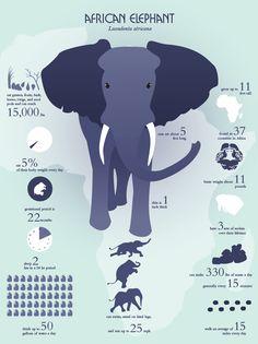 Elephant infographic.