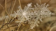 These macro images of snow flakes were snapped by Russian photographer Andrew Osokin.
