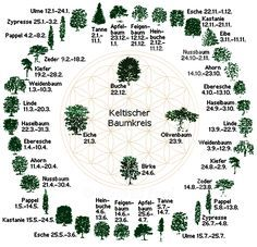 Dein Sternzeichen im keltischen Horoskop und was es über dich verrät You like to deal with the signs of the zodiac and what they say about a person? Then you will love the Celtic tree calendar! Wicca, Medicine Wheel, Zodiac Society, Beltane, Natural Energy, Book Of Shadows, Yoga Meditation, Life Is Beautiful, Witchcraft