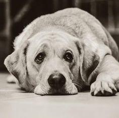 remedios caseros para diarrea de mi perro