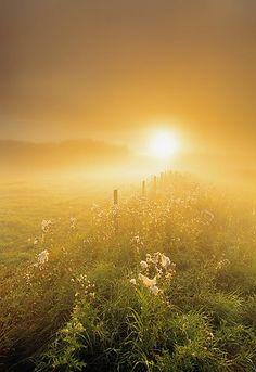 Sunlit prairie, Alberta Canada by Darwin Wiggett