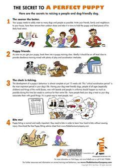Useful Dog Obedience Training Tips – Dog Training Training Your Puppy, Dog Training Tips, Training Classes, Potty Training, Training Quotes, Training Pads, Puppy Training Schedule, Training Online, Training Exercises