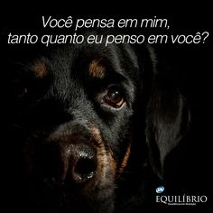 O tempo todo.  Do you think about me, as much as I think about you?   #cachorro #dog #amor #love