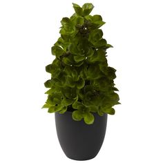 New Echeveria Cone Topiary >>> Check this awesome product by going to the link at the image.