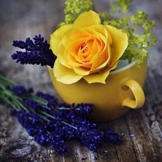 Nice! Thank you! RT flower of compassion   Behind what u love, there's a secret of who u're  #flowers #beautyful #flower