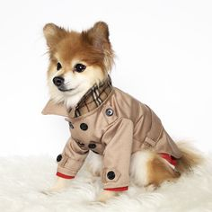 90d204f2212 Dog Brown, Navy Trench coats, puppy clothes, pet hoodies, small dogs  outerwear, luxury dog jacket, puppy hoodie,winter dog sweater,dog shirt