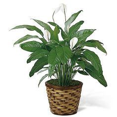 proflowers edible arrangements