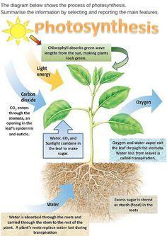 Photosynthesis diagram of a flower plants and animals 3rd 5th diagram of a plant see more ielts ccuart Image collections